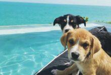 Photo of Una organización llevó perros a una playa paradisíaca para que jueges con ellos 🐶⛱️