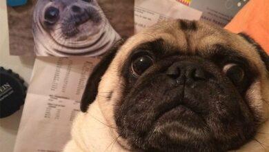 Photo of Estos 10 animales ponen caras que los hacen ser más adorables