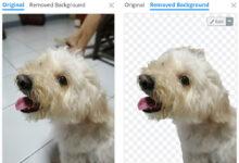 Photo of Cómo borrar el fondo de una foto fácil y gratis con Remove.bg para Android