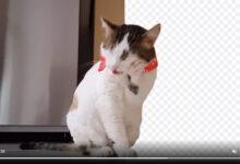 Photo of En este sitio puedes eliminar el fondo de un vídeo o GIF animado de forma automática y gratis
