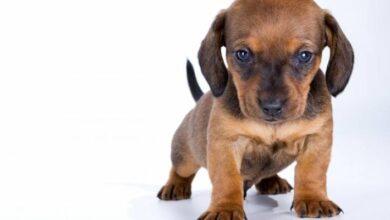 Photo of Cuarentena: Tener mascotas en la casa aumenta la salud mental y reduce la soledad