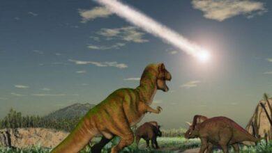 Photo of Evidencia encontrada en el cráter Chicxulub revela nueva información sobre lo que ocurrió en la extinción de los dinosaurios