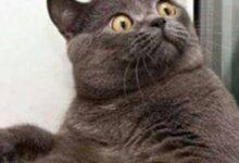 Photo of Estudio: científicos aseguran que hay más gatos infectados de coronavirus de lo que se piensa