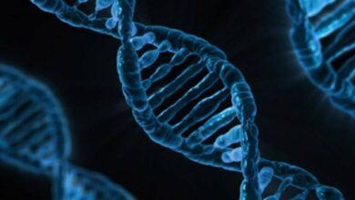 Photo of Científicos advierten sobre los peligros de la edición de los genomas y las consecuencias a largo plazo