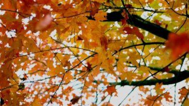 Photo of Ciencia: ¿a qué hora exactamente es el equinoccio de otoño?