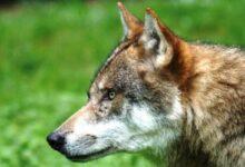 Photo of Desterraron en Italia los restos de lo que sería el perro doméstico más antiguo del mundo