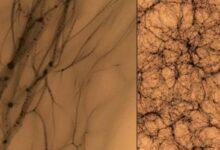 Photo of Ciencia: Este sería el aspecto de la materia oscura si pudiéramos verla