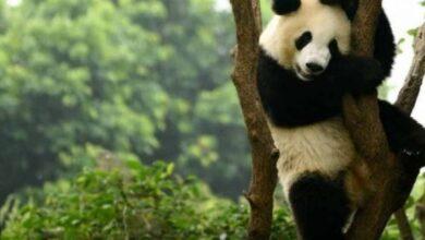 Photo of Estudio: Fondo Mundial para la Naturaleza advierte que la vida silvestre disminuyó en más de dos tercios en los últimos 50 años