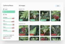 Photo of Microsoft lanza vista previa gratuita de Lobe, para entrenar modelos de IA sin programación