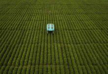 Photo of Madre de Google crea proyecto para mejorar la agricultura