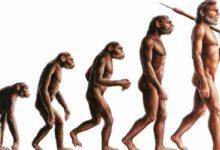 Photo of Estudio: la raza humana sigue evolucionando y los científicos lo demuestran a través de la presencia de una arteria