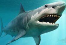 Photo of Estas siete criaturas marinas son mucho más peligrosas que un megalodón