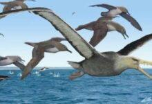 Photo of Los secretos descubiertos sobre las gigantescas aves prehistóricas de la Antártida