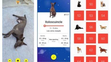 Photo of Una app que reconoce razas de perros y las colecciona
