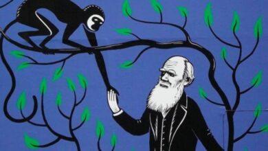 Photo of Cambridge: se robaron dos cuadernos de Charles Darwin y lo denunciaron veinte años después