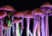 Photo of Los hongos psicodélicos pueden ayudar en el tratamiento de la depresión