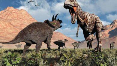 Photo of Un Tiranosaurio Rex y un Triceratops  pelearon hasta la muerte y así encontraron sus restos óseos 67 millones de años después