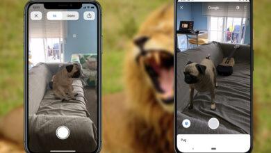 Photo of Google añade 50 nuevos animales 3D: hipopótamo, ardilla, jirafa y muchos más
