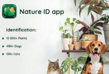 Photo of NatureID, o cómo reconocer la especie o raza de más de 10.000 plantas, 480 perros y 100 gatos con solo una foto