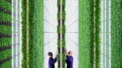 Photo of Cultivando en vertical