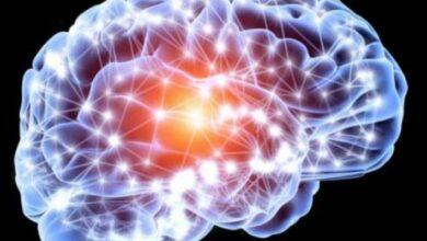Photo of Científicos desarrollaron un método basado en microfibras para administrar y activar fármacos en el cerebro