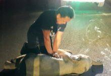 Photo of VIDEO: Así revivió un hombre a un elefante bebé en Tailandia