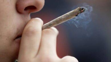 Photo of Marihuana: El cannabidiol no afecta el manejo, pero sí el THC