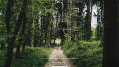 Photo of Esta web te ofrece un escape a la naturaleza con sonidos de bosques aleatorios alrededor del mundo