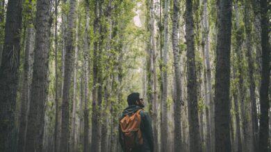 Photo of Ofertas de Amazon en abrigos y sudaderas Geographical Norway que llegan a tiempo para Reyes