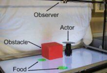 Photo of Crean robot que predice los movimientos de robot compañero