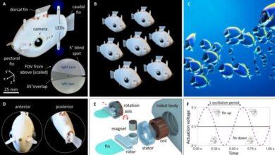 Photo of Bluebot, robots submarinos que nadan como bancos de peces