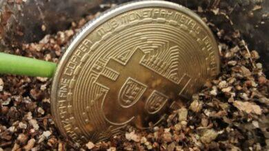 Photo of Se pueden recuperar parte de los Bitcoins perdidos en Mt. Gox