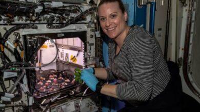 Photo of Astronautas de la Estación Espacial Internacional comieron rábanos que cosecharon dentro de la nave