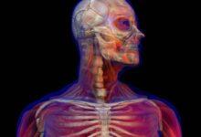 Photo of ¿Qué ocurre en tu cuerpo minuto a minuto cuando tomas una bebida energizante?