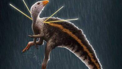 """Photo of Ciencia: Un """"pollo prehistórico"""" brasileño terminó en Alemania y no saben cómo llegó"""