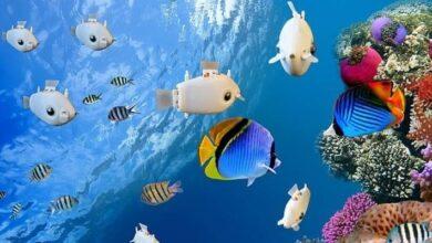 Photo of Ciencia: estos pequeños peces robots se mueven bajo el agua sin la necesidad de un control externo