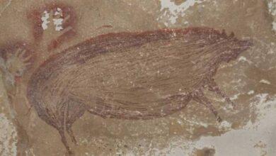 Photo of ¿Qué es un babirusa, el protagonista de la pintura rupestre más antigua del mundo?