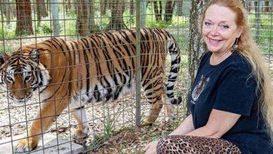 Photo of Tiger king: Carole Baskin ahora carga una arma consigo gracias a las amenazas de muerte en su contra