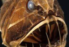 Photo of Ciencia: ¿qué criaturas habitan en los lugares más profundos de la Tierra?