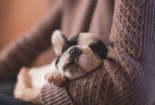 Photo of Las mejores camas para mascotas según los comentaristas de Amazon