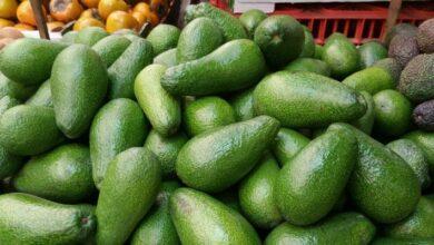 Photo of ¿Cuántos tipos de aguacate/palta existen y cuál es el más nutritivo?