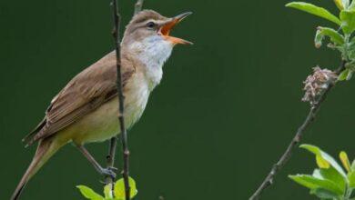"""Photo of Las aves pueden """"leer"""" la firma magnética de la Tierra y así es como lo logran"""
