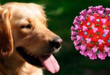 Photo of Coronavirus: Corea del Sur aplica pruebas de Covid-19 hasta a sus perros y gatos
