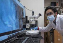 Photo of Científicos crean diminutos robots que emulan el comportamiento de agrupación de los Gusanos Negros de California