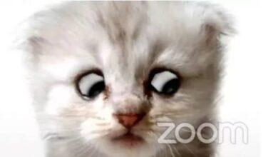 Photo of Zoom: así puedes usar el filtro de gatito que se hizo viral para videoconferencias