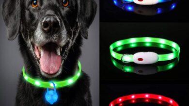 Photo of Este es uno de los collares para perros más vendido de Amazon: tiene luces LED, utiliza USB para cargar y cuesta menos de 10 euros
