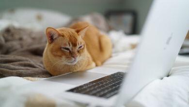 Photo of 22 sitios web inútiles pero perfectos para procrastinar cuando estás aburrido
