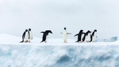 Photo of 31 distribuciones Linux para elegir bien la que más necesitas