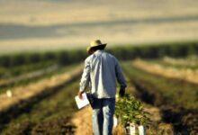 Photo of Los pesticidas pueden afectar las granjas durante varias décadas, según estudio