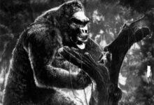 Photo of ¿Podría existir un gorila tan grande como King Kong?